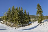 picture of serenity  - Serene winter landscape with an isolated fir trees clump in a snowy mountain meadow on a sunny day - JPG