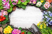 stock photo of flower pot  - Frame of spring flower and gardening tools on old wooden background - JPG