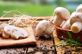 stock photo of picking tray  - freshly picked mushrooms on a wooden table in the field prepared for cooking - JPG