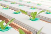 stock photo of hydroponics  - Hydroponics green vegetable growing in the nursery - JPG