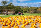 image of hayride  - Pumpkin patch field on a farm in the fall with hayride - JPG