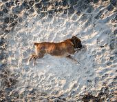 stock photo of dog teeth  - photograph of a dogs playing in the beach - JPG
