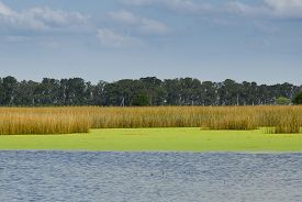 picture of pampa  - lagoon in the Pampas in Buenos Aires Argentina - JPG