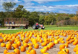 picture of hayride  - Pumpkin patch field on a farm in the fall with hayride - JPG