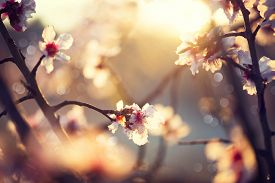 picture of fragile  - Spring blossom background - JPG