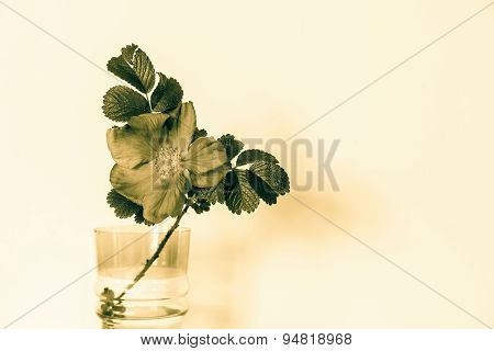 Blossomed Dog Rose In A Glass Vase Of Bronze Tone