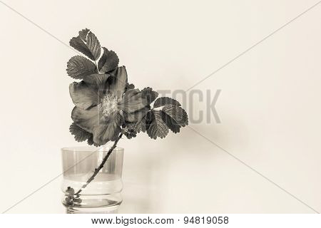 Blossomed Dog Rose In A Glass Vase Of Beige Tone