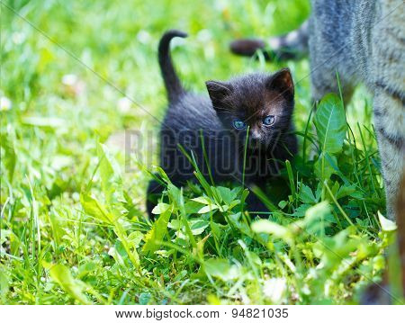 Black  Kitten In A Grass And Blue Flowers.