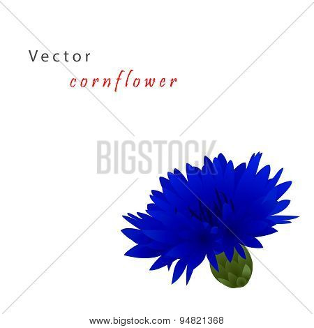Template card with cornflower