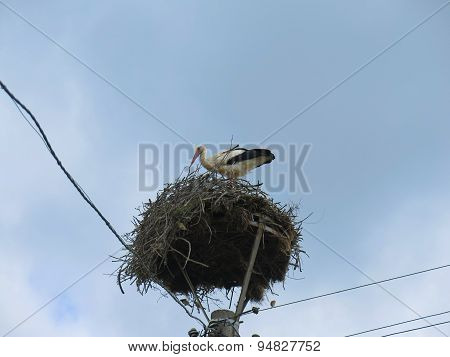Stork In The Nest On Top Of A Pole