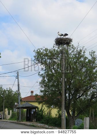 Storks On Top Of A Pole In The Nest