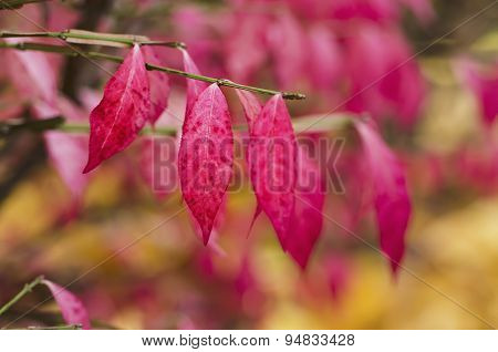 Autumn purple plant