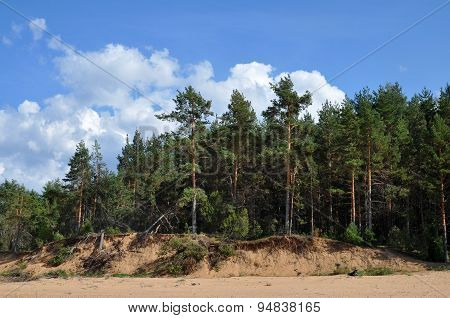 Landscape With Pine-trees