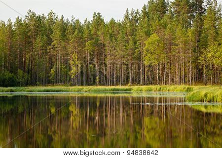 Serene sunny morning forest reflection