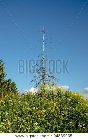 Dead lone tree without leaves on a hill