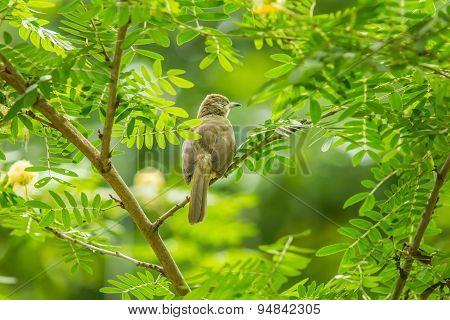 Bird on the Tree