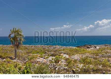 Shore Of Grand Cayman Island, Cayman Islands