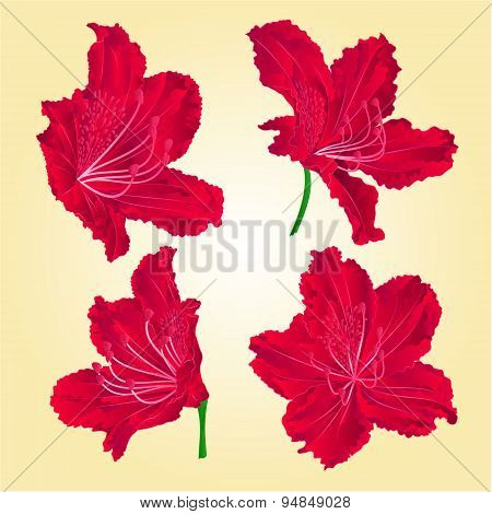 Red Rhododendrons Vector