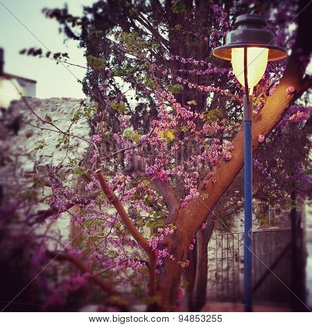Lamp Post And Blooming Tree