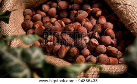 hazelnuts in a bag with ivy