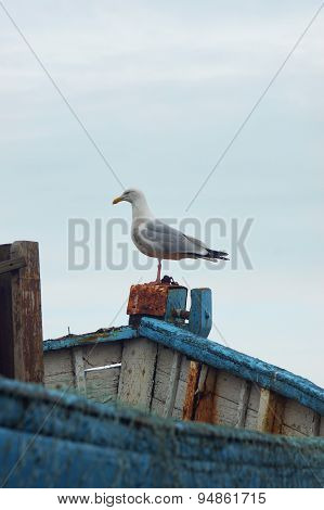 Seagull standing on boat