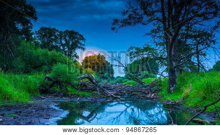 The old riverbed filled with trees