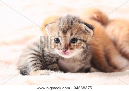 little cute kitten