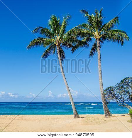 Cococnut Palm Trees On The Sandy Poipu Beach In Hawaii