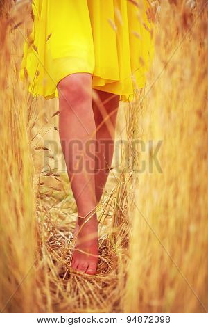 Young Delicate Woman's Feet Walking Through Summer Wheat Field