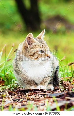 Little Kitten Sitting On The Grass