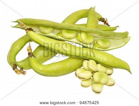 Raw Uncooked Fresh Broad Beans