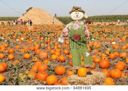 Scarecrow in autumn pumpkin field