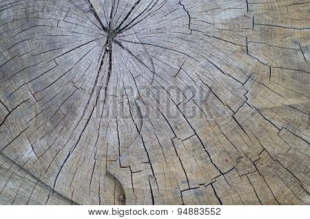 Chopped Wooden Tree Trunk