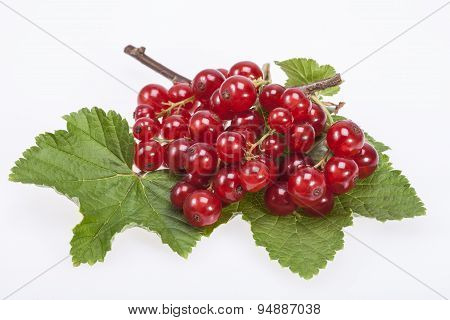 Twig Of Red Currant On Green Leves