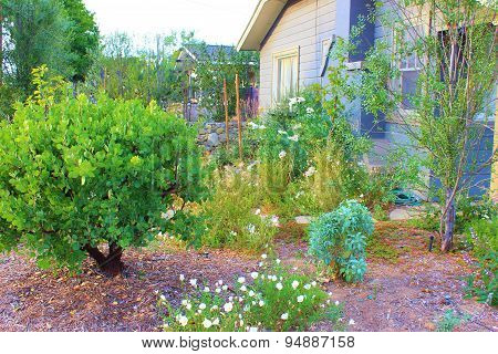 Drought Tolerant Yard