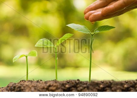 growing and nurturing young plants