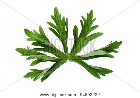 Cranesbill Leaf