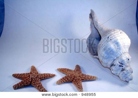 Border Shell N Stars