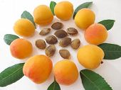 picture of apricot  - Apricots in a circle with apricot kernels in the middle - JPG