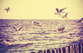 picture of water bird  - Vintage retro stylized photo of birds on the sea old film effect - JPG