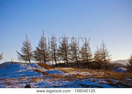 dried trees on a mountain ridge .