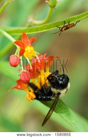 Bugs On A Flower