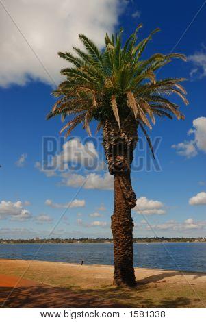 trees blue skies Swan River Perth