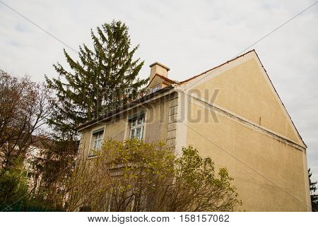 old house in munich, tree, wood, autumn