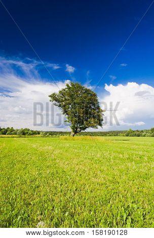 Nobody Outside Grass Land