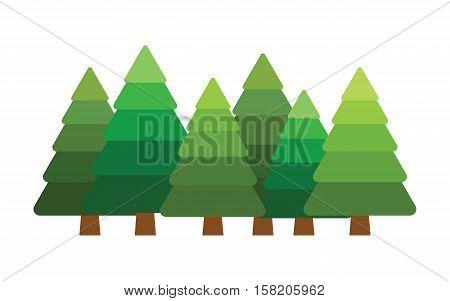 christmas vector tree fir, evergreen Blue spruce, forest vector illustration