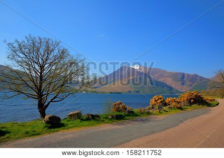 Loch Leven Lochaber Geopark Scotland uk view to Glen coe with snow topped mountains and yellow flowers and just off B863 road south of Ben Nevis