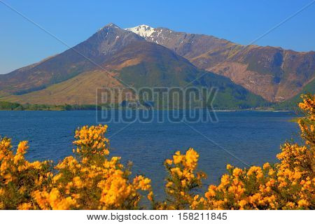Glen coe mountains with snow topped mountains and yellow flowers Loch Leven Lochaber Geopark Scotland uk