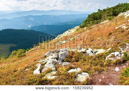 The Carpathian Mountains. Slope Covered With Orange Bilberry Bushes