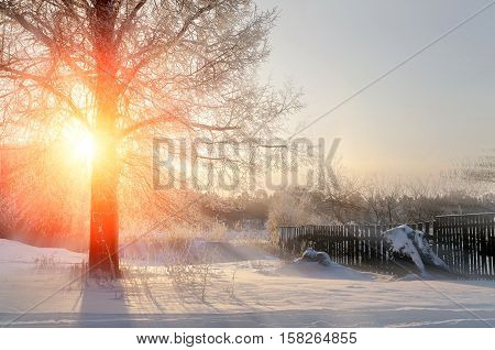 Winter sunset landscape with the frosty winter trees and sunlight beams -winter landscape scene. Winter rural landscape in cold sunset. Winter landscape with nature covered with snow at winter sunset